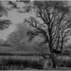 ...Im mocniej wrośnięte w ziemię korzenie - tym silniejsze całe drzewo... ::