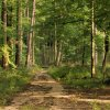 Chociaż mokro, chociaż wo<br />da spływa, czas w las... ::