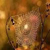 W jesiennych barwach:)