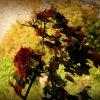 Jesienne liście drżą na w<br />ietrze:-)