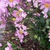 W moim ogrodzie. ......  <br />pozdrawiam serdecznie :)