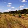 Bocznice nieczynnej stacj<br />i kolejowej Toruń Północn<br />y