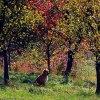 Kolory jesieni i ... pies<br />.