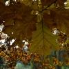 Jesieni kolory ;)