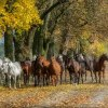 jesienny powrót..