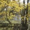 w jesieni