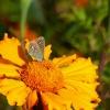 Motylki dziś spotkane.