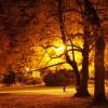 Jesień nocą.