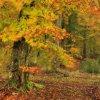 Wiatr przywiał jesień na <br />Kaszuby..