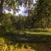 Jesienny krajobraz z wczo<br />rajszego spaceru