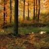 Jesienią lasy się mienią.<br />..