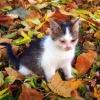 Jesienny kotek, czyli nas<br />z Piątek...:)