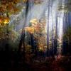 W dębowym lesie