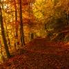 Już jesień...z pozdrowien<br />iami