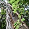 GDYNIA -  W lesie na Grab<br />ówku jeszcze zielono... 🌲<br />🌲🌲