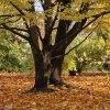 Jesienny dywan