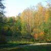 Jesienne brzozy przy ście<br />żce nad Narwią