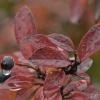 Kroplą rosy wymaluję świat tonący w barwach jesieni :) ::