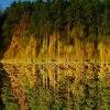 ,,, jesień na Rejowie ,,,