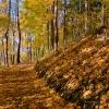 Piękna Pani Jesień zapras<br />za na spacer  nad brzegie<br />m jeziora i na skraju las<br />u