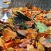 Jesienny kotek..:)