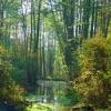 Oczko wodne w Lasach Niep<br />oręckich