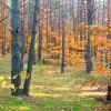 Jesień w Lasach Otwockich