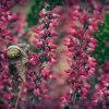 Kwitnące wrzosy to symbol<br /> jesieni.