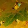 uroki jesieni chłonąć wzr<br />okiem...słuchem....dotyki<br />em  i sercem......