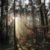 Leśny poranek