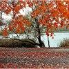 Jeszcze pażdziernik kolor<br />ami cieszy....