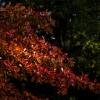 Jesienne zauroczenia dla <br />Ciebie Marku:)Classical M<br />usic for Autumn