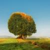 Jesień jest piękna, gdy n<br />ad nami śpiewają drzewa k<br />olorami .