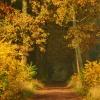 Szumi wiatr .... W suchy<br />ch liściach wygwizduje sw<br />oje opowieści.:))Miłego p<br />opołudnia)