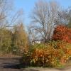 ...już jesień... :-)