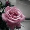 Dla Ciebie Elu  ta róża. <br />Miłego wieczoru