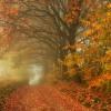 Lubię złote tarasy dróg m<br />alowanych jesienną henną,<br /> lubię dywany liści szepc<br />zące szelestem duszy i ci<br />szy .