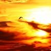 Zachód slońca z ptakiem w<br /> tle