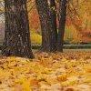 Urok jesieni