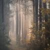 Leśna cisza