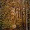 W lesie....
