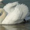 Biały puszek:)