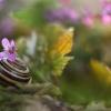 Domek z ogródkiem ::