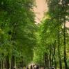 Park w Białymstoku  ::