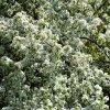 Rośliny z bliska. Kwitnąc<br />e wiśnie w Parku Krajobra<br />zowym.