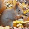Polowanie na wiewiórki ;)<br />