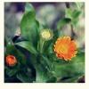 Jesienne ❀ ogrodowe i po<br />lne ✿