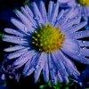 niebieski poranek....pięk<br />nego dnia życzę wszystkim<br />:))
