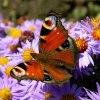 kwiaty i motyle....