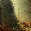 Przez leśne gąszcze:) Lub<br />ię ten naturalny nieład:)<br /> Dzisiaj było deszczowo a<br />le ciepło:) Dobrej nocy